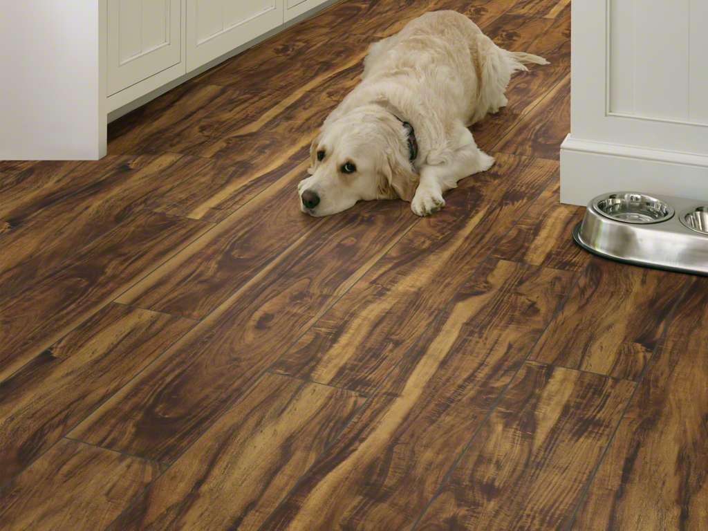 Vigorous Plus Floorte Pro 6 Series